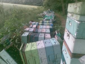 zdewastowana pasieka pszczela