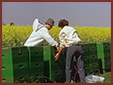 Rotacyjna hodowla pszczól