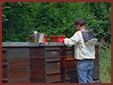 Selekcja pszczoly miodnej