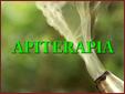 Apiterapia - Miód: Jego walory w diecie