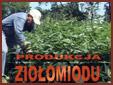 Produkcja ziolomiodu