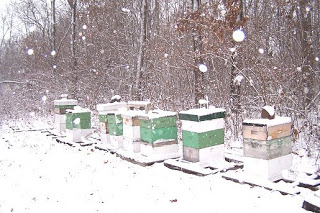 Winter Hives
