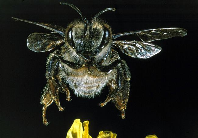 Zmutowane pszczoły sieją strach w miejscowości Spęd na Warmii , SPL, East News
