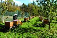 - Pszczelarski sezon zaczyna się od jesieni. Nawet jeśli któraś z tych rodzin przeżyje zimę, na wiosnę może być osłabiona. Kłąb, w który zbijają się przed zimą pszczoły, został rozluźniony, to oznacza obniżenie w nim temperatury, a tej nocy było tu minus cztery stopnie - martwi się Jacek Sikoń, pszczelarz, któremu w pasiece wizytę złożyli wandale.