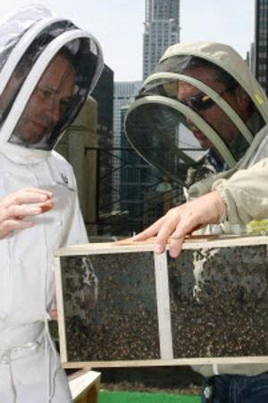 HOTEL SWEET:  Honeybees are shown their new accommodations yesterday.